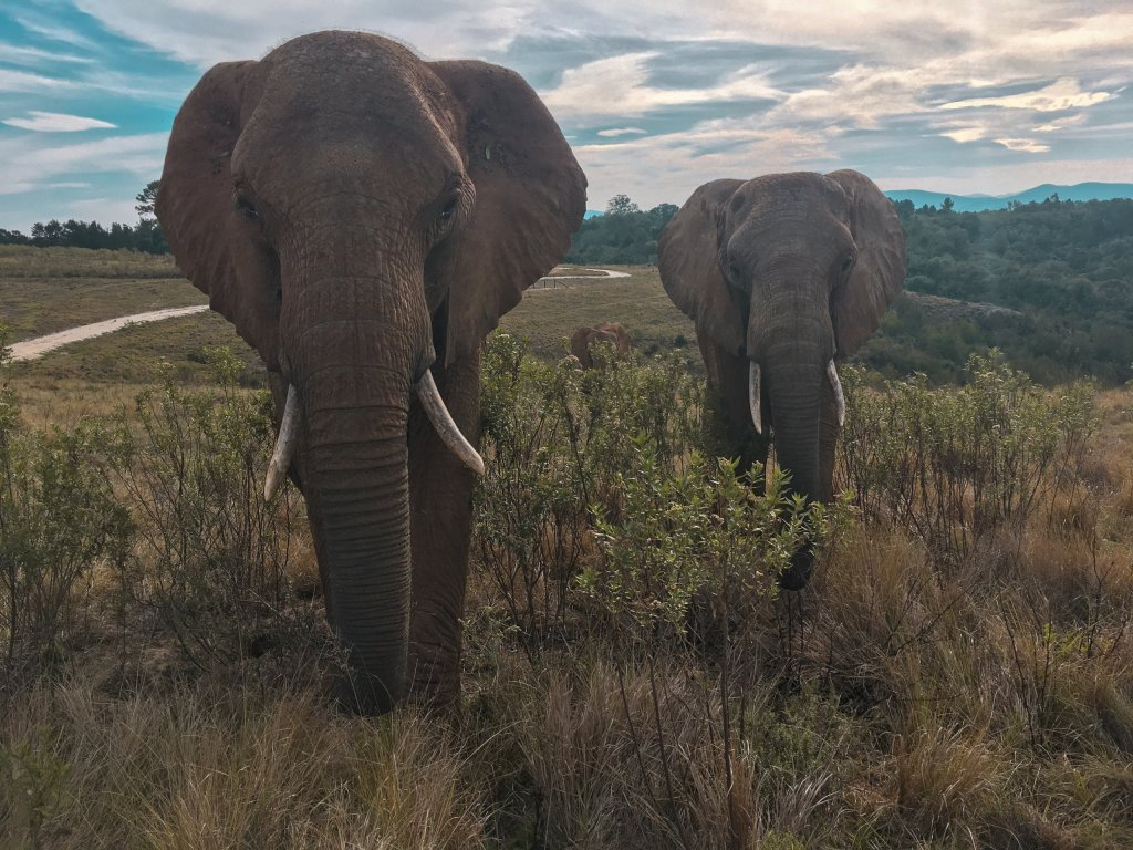 Is volunteering with elephants ethical? | The Vegan Abroad