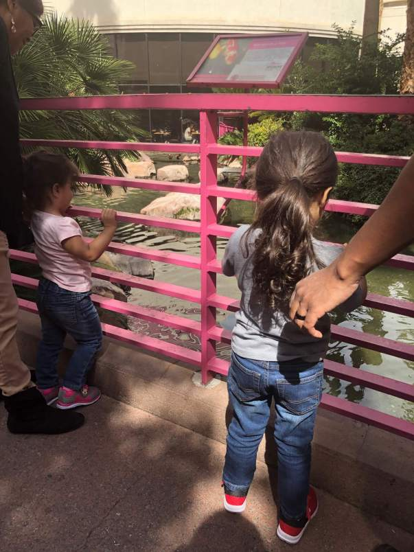Family Friendly Las Vegas: The Flamingo Wildlife Habitat
