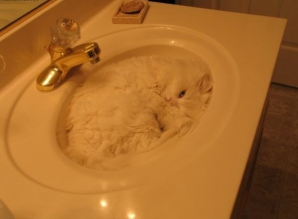 Top 10 Camouflage Cats Blending Into Backgrounds