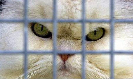 Top 10 Funny Images of Cats Behind Bars