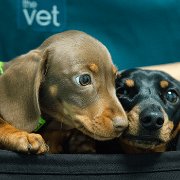 Puppy vaccination course