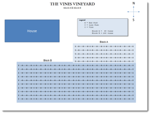 The Vines First Vineyard