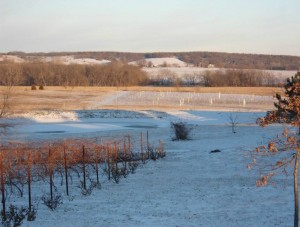 Winter in the Vineyard