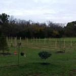 Vineyard Trellis System Going In