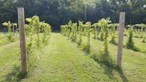 The Vine 2017-08