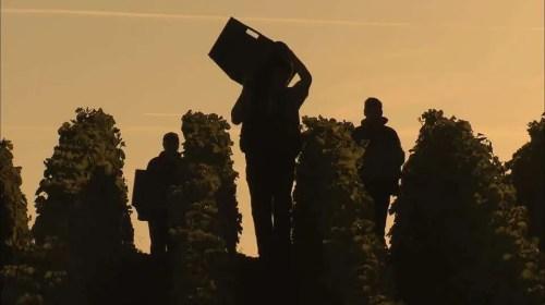 Harvest 2016: Champagne, France