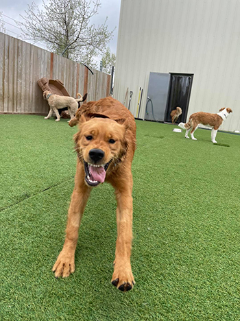 Our new puppy, Patsy, at doggy daycare