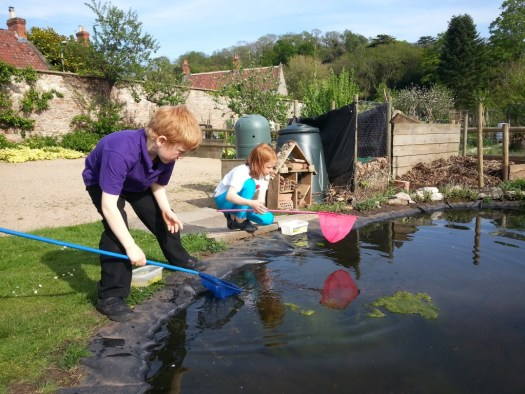 Pond dipping The Bishop's Palace Wells