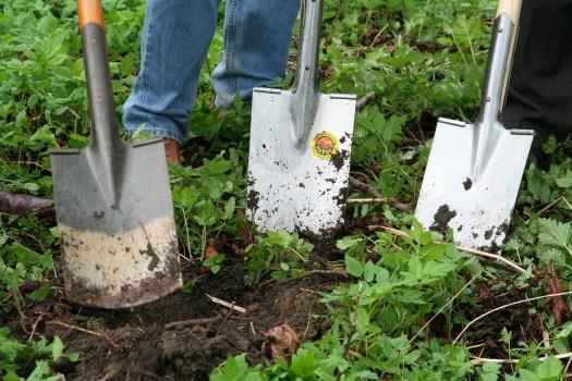 swp-gardening-331986_1920