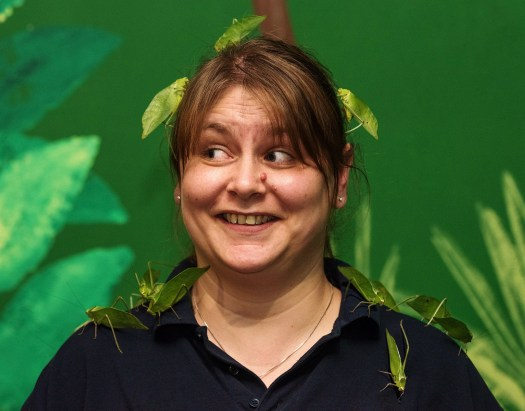 Keeper Kim Ovens covered with katydids at Longleat