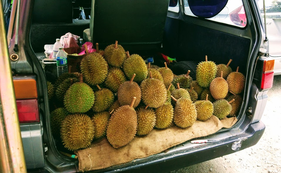 durian-042