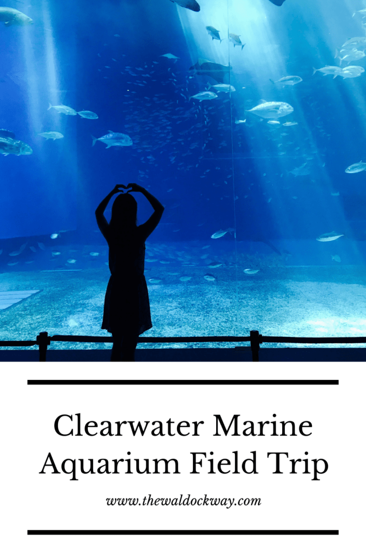 We had the opportunity to visit the Clearwater Marine Aqurium recently and they definately did NOT disappoint! Come along with us.