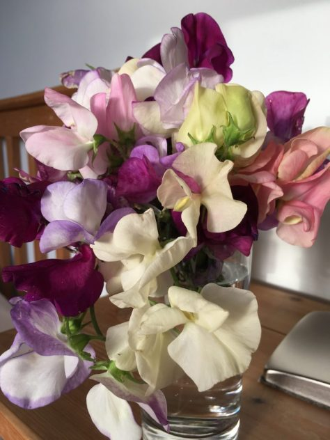 Drifting off to sleep with the sweet fragrance of Sweet Peas