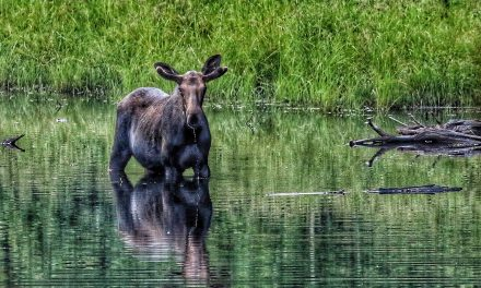 Thunder Bay Field Naturalists