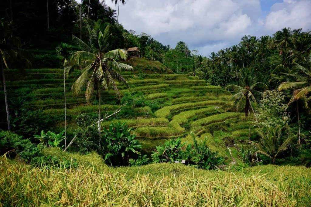 Tagalalong Rice Fields | Exploring around Ubud, Bali for a day