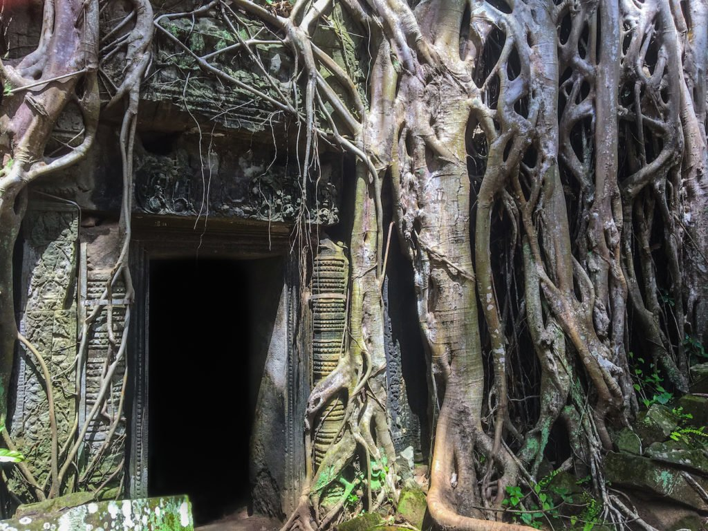 Nature taking over temples at Angkor Wat • Remarkable Tips to Make Traveling to Cambodia Easier   The Wanderful Me