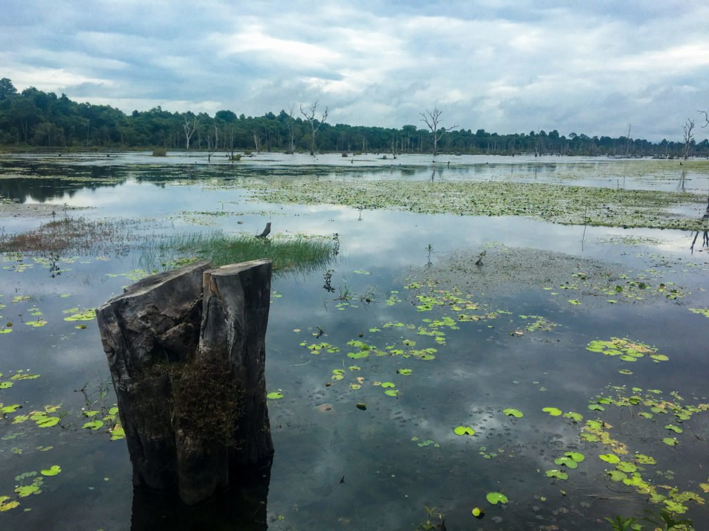 Mangrove Marshes • Remarkable Tips to Make Traveling to Cambodia Easier   The Wanderful Me