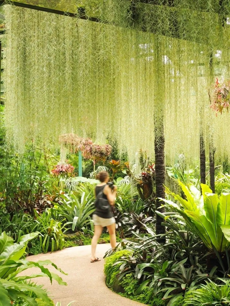 Singapore Photography Locations - National Orchid Gardens by The Wandering Lens photographer Lisa Michele Burns
