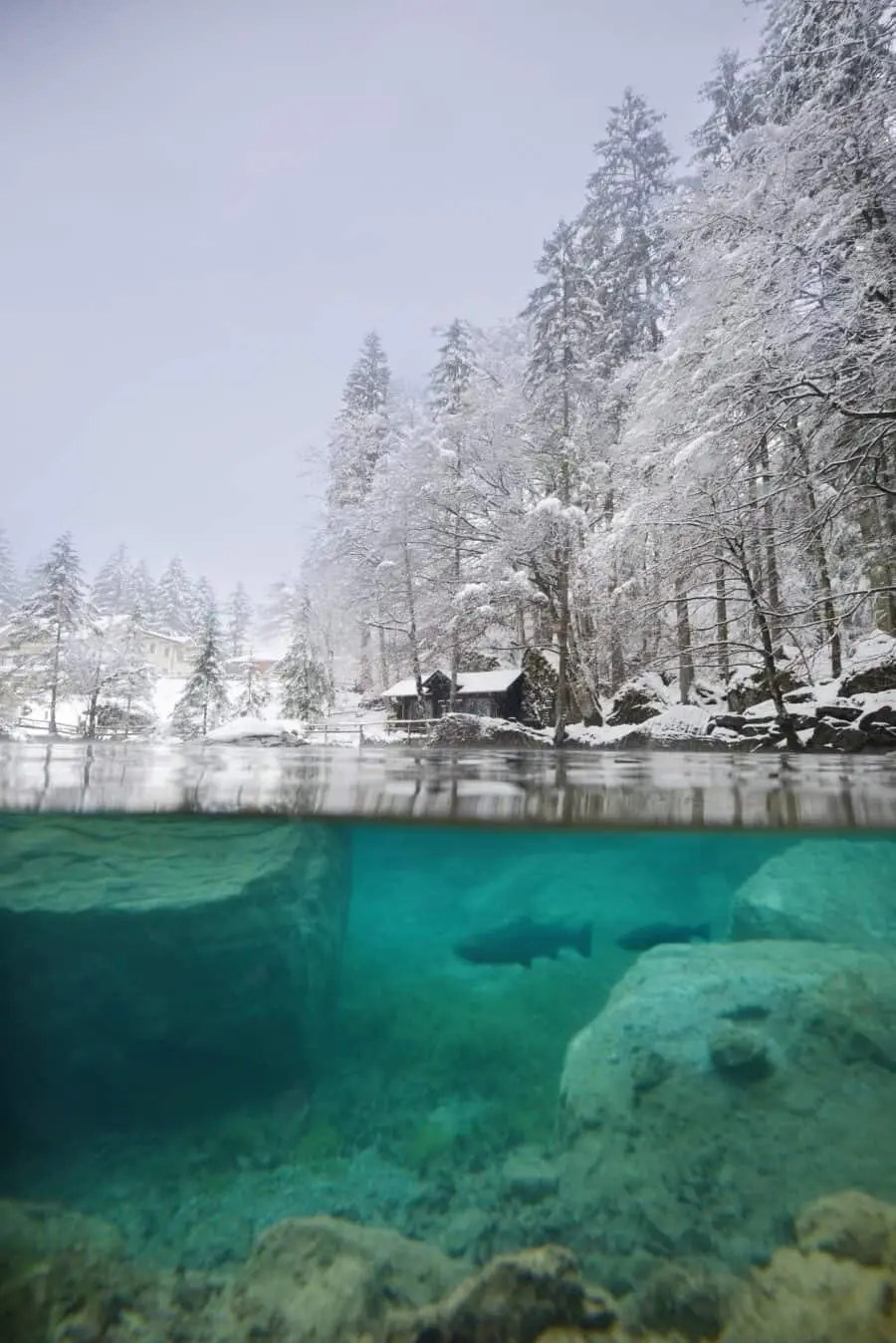 Lake Blausee, Switzerland by The Wandering Lens (7)