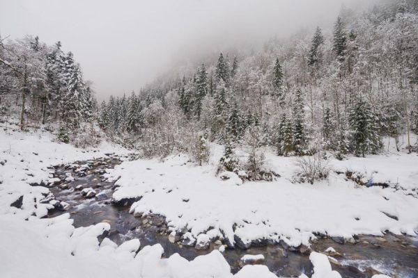 in snow - learn