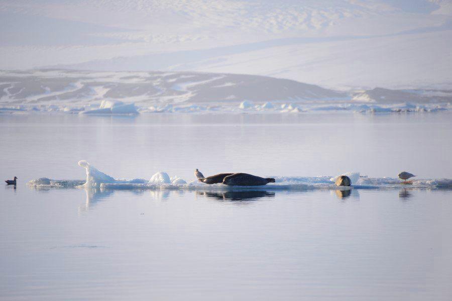 Jokulsarlon Glacier Lagoon Iceland and Diamond Beach Photos - Iceland Photography (1)