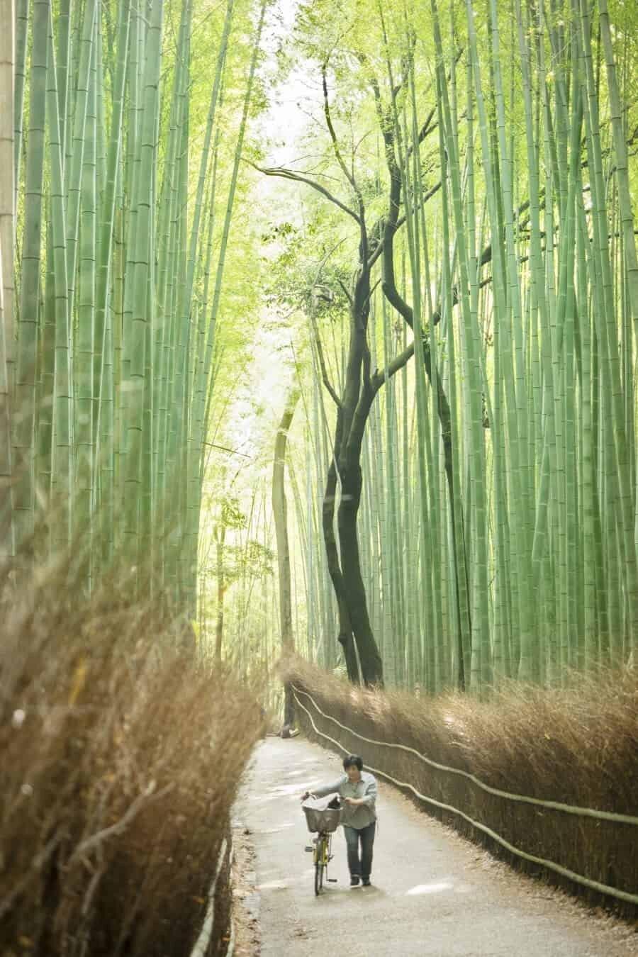 Arashiyama Bamboo Grove, Kyoto Japan - Improve your travel photography by The Wandering Lens