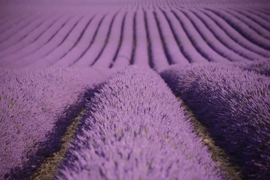 Provence, France beautifu locations and lavender