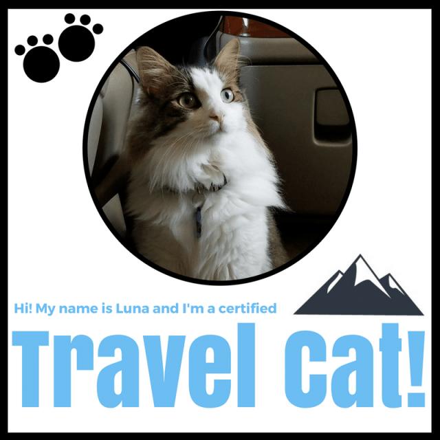 Travel Cat Luna