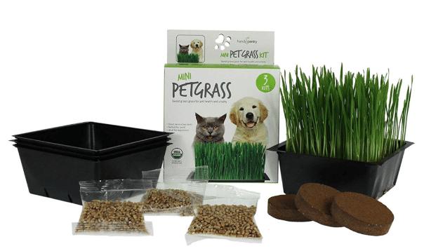 Mini Organic Cat Grass