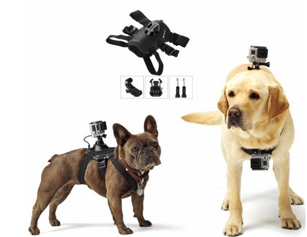 Pet Go-Pro harness