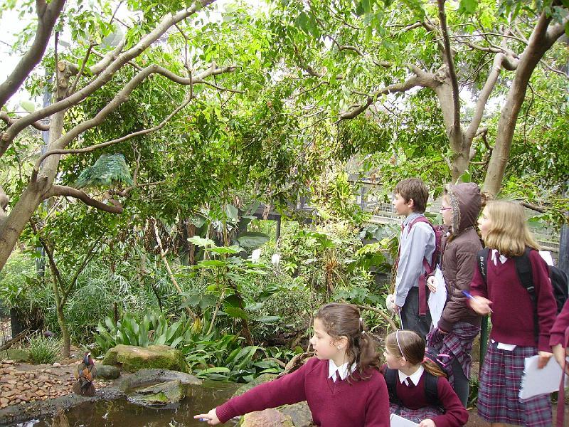 Zoo excursion yr 5 4-8-09 014