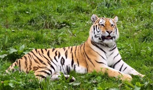 the-periyar-wildlife-sanctuary