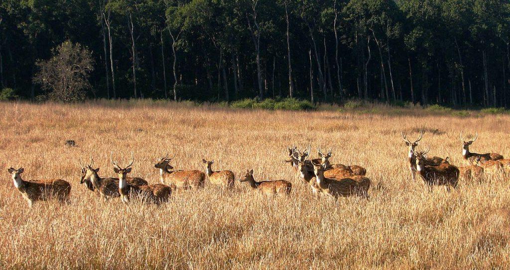 Kanchkula Kharak Musk Deer Sanctuary