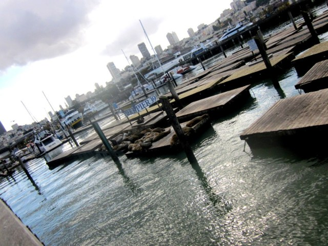 Pier 39, San Francisco Walking Tour