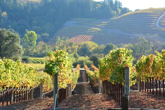 Dutcher Crossing, Sonoma, Winter Wineland