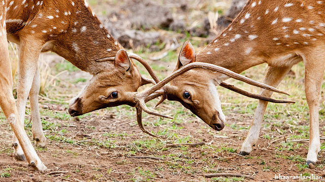 Bandhavgarh Park