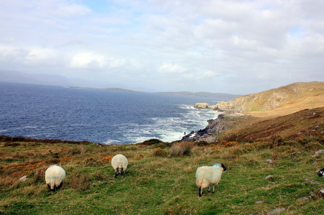 Scenic Drive: The Ring of Beara, Ireland