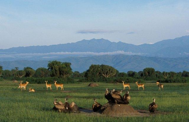 Queen Elizabeth National Park, Uganda