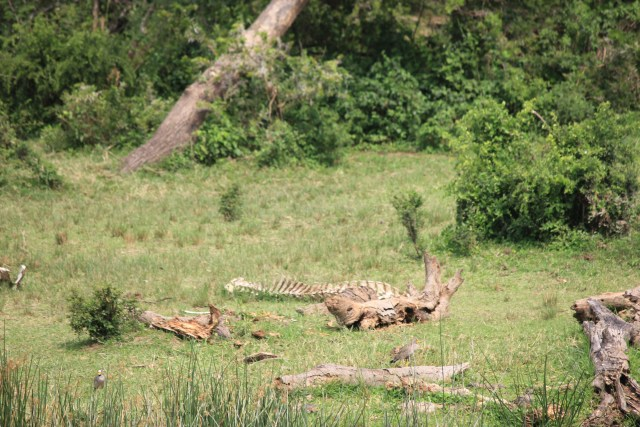 Kazinga Channel Cruise, Uganda