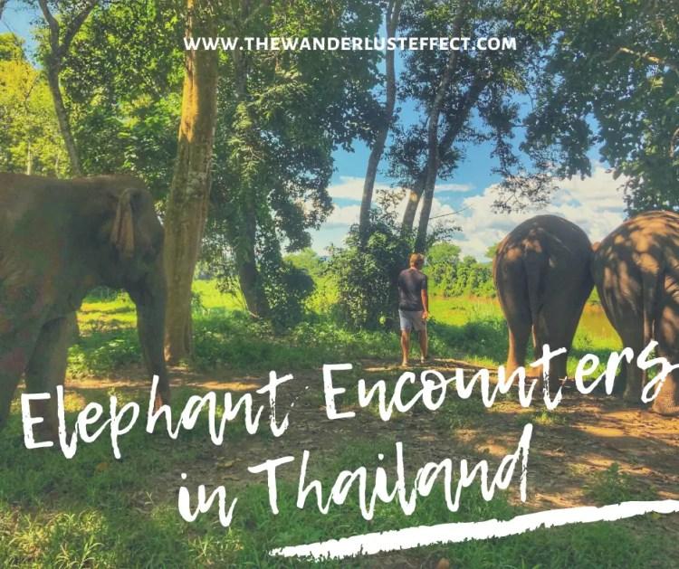 Anantara Elephant Encounters, Golden Triangle