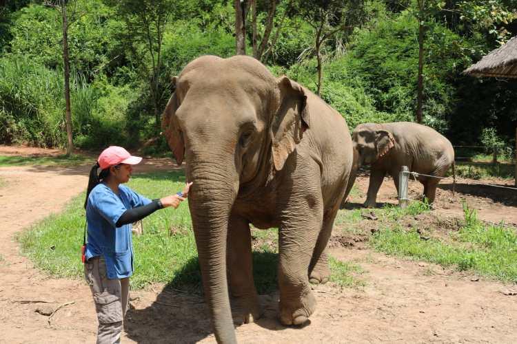 Anantara Elephant Learning Experience