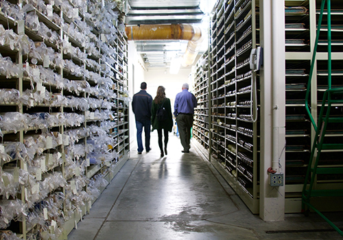 Regional Archives 2 - c