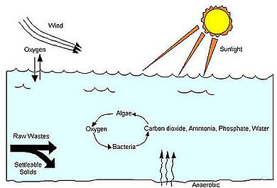 Types functions of waste stabilization ponds water for Design of anaerobic pond