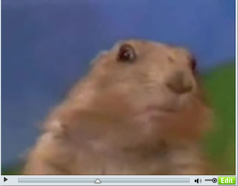 Dramatic Hamster: You talkin' to me?
