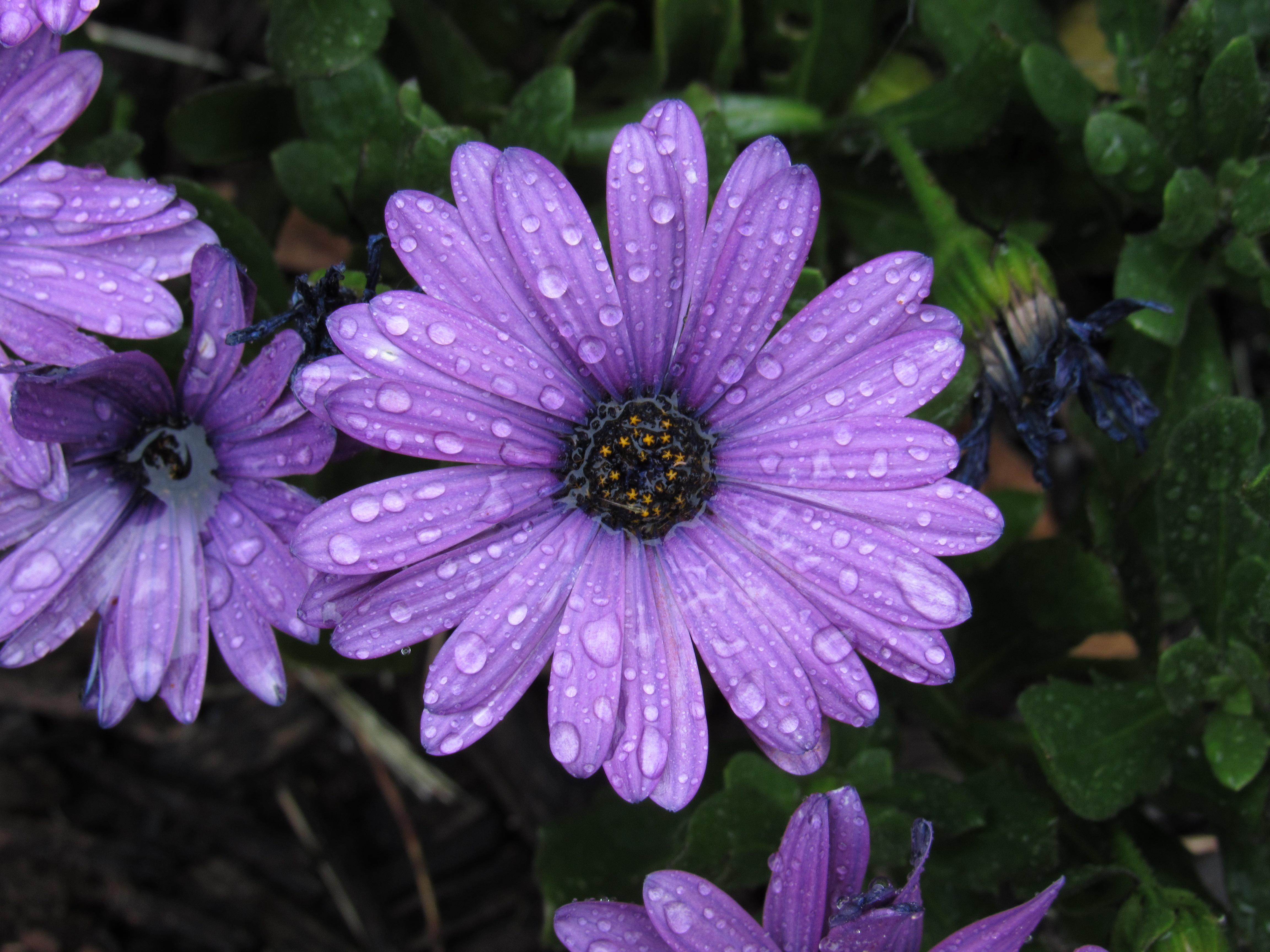 A Soulful Spring (Featuring Bonus Onward and Upward Tarot Spread)