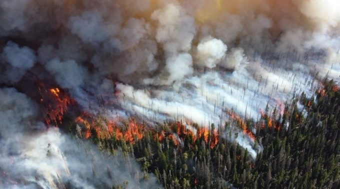 wind changes the direction of forest fire