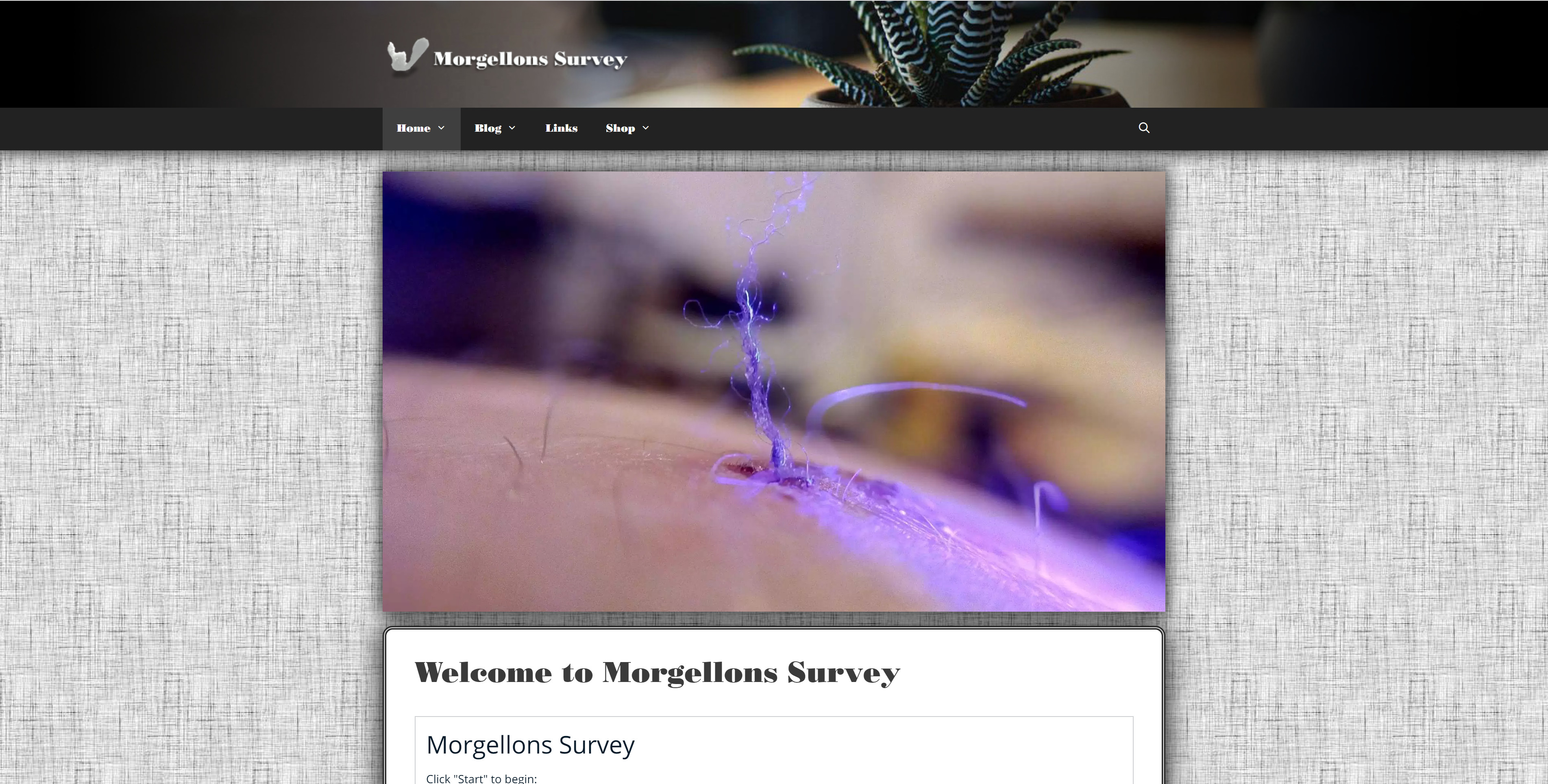 Morgellons Survey Custom Website Design