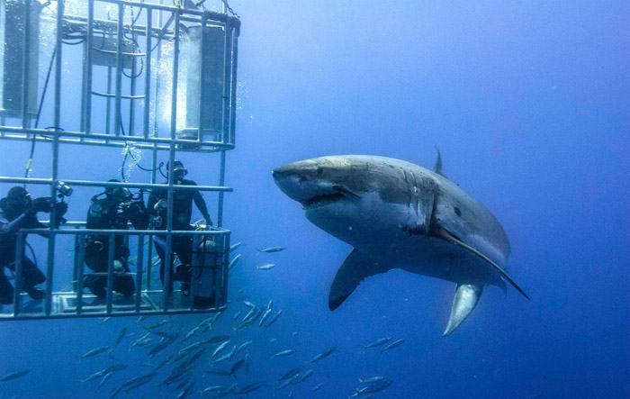 Cage Shark Diving, South Africa. Honeymoon itimerary for South Africa. www.theweddingnotebook.com
