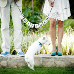 The Know-it-all Guide to Wedding Planning