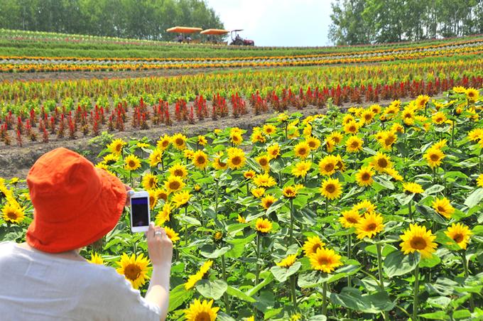 Hokkaido Honeymoon - Shikisai No Oka - Hokkaido Likers